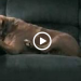 What This Dog Does Will Have You LOL'ing