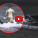 Killer Whale Attacks Man On Beach – WARNING: Graphic