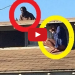 RAW VIDEO – Half-Clothed Woman Rushes To Roof To Escape Intruder