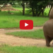 What Happens When A Baby Elephant Meets A Cat? Extreme Cuteness!
