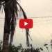 HORRIFYING! Raining Spiders In Brazil