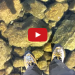 AMAZING: Watch These Men Walk On A Frozen Crystal Clear Lake