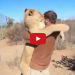 Watch What Happens When This Lion Gives His Owner A Hug