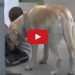 Dog Cares For This Child As His Own, When You See Why It Will Bring Tears To Your Eyes