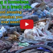Homeless Dog Living In A Trash Pile Gets Rescued