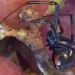 Check Your Grapes! 700-800 People a Year Find Black Widows in Them