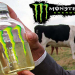 Monster Energy Using Urea (Cow Urine) Compound As An 'Energy Booster' In Drinks