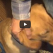 See Why This Amputee Veteran And Service Dog Were Kicked Out Of Starbucks