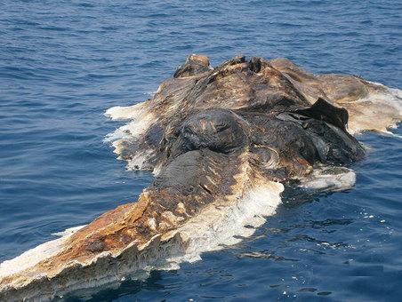 04-strange-creature-found-persian-gulf-whale
