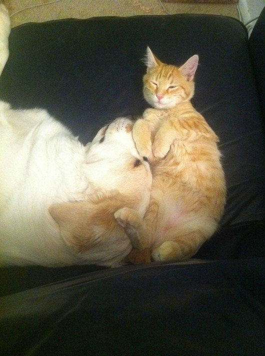 14-cats-and-dogs-napping-together9.jpg.pagespeed.ce.7eBH_n7hKLgAGlqhkyIq
