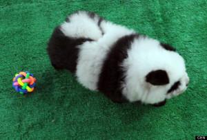o-PANDA-DOGS-57r0