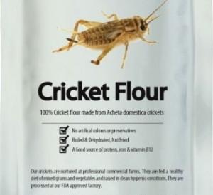 cricket-flour-side-1-650x650
