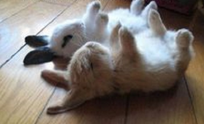 how to teach a rabbit its name