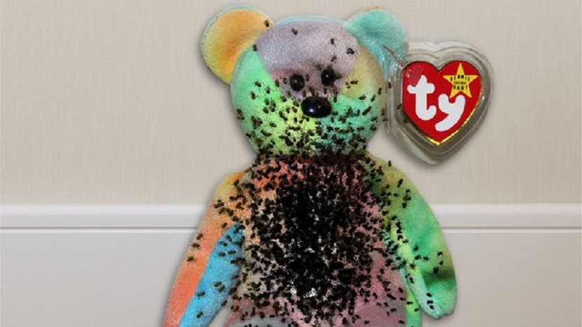 Spider Eggs Used To Fill Beanie Babies Are Finally Hatching