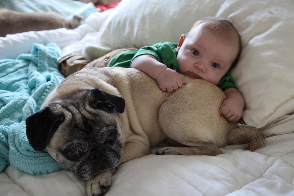 Dogs Who Are Already BFFs With The Baby - 23 adorable photos proving babies need pets