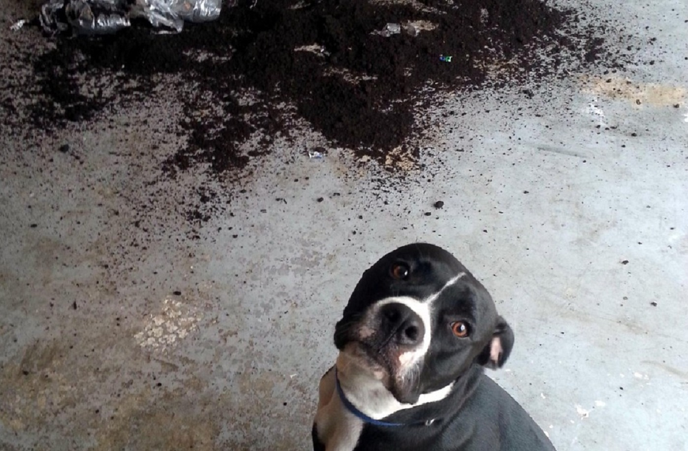 11 Innocent Dogs That Don't Know How This Mess Happened