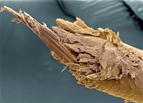 A split human hair