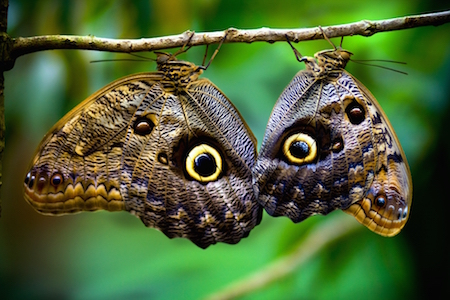 Butterflies_Costa_Rica