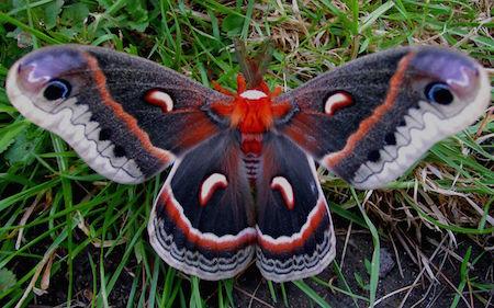 Butterfly-Unique-Look-wallpaper-HD