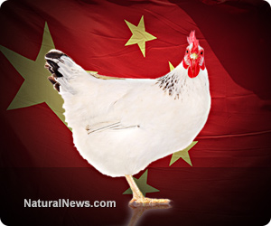 China-Flag-Chicken-Hen