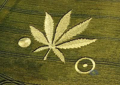 Crop-Circles-marijuana-leaf