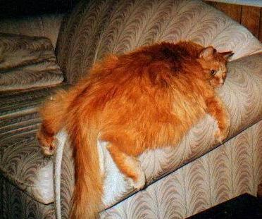 Fat_cat_1