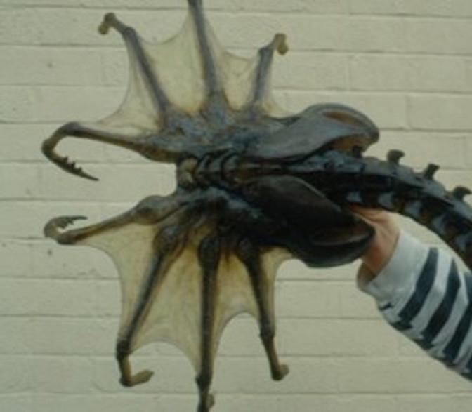 Sea spider - photo#11