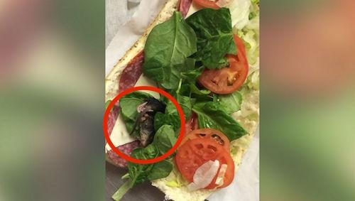 HT_subway_rodent_sandwich_jt_151013_v4x3_31x13_1600