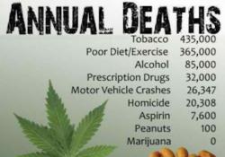 Marijuana-is-Safe-298x300