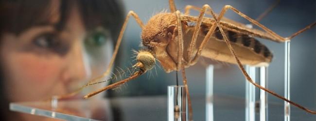 Mosquito-Brazil-e1422290884789-650x250