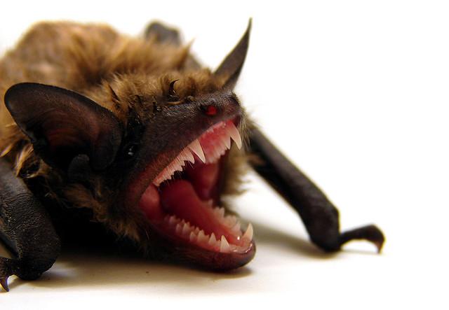 Scary-animal-bat