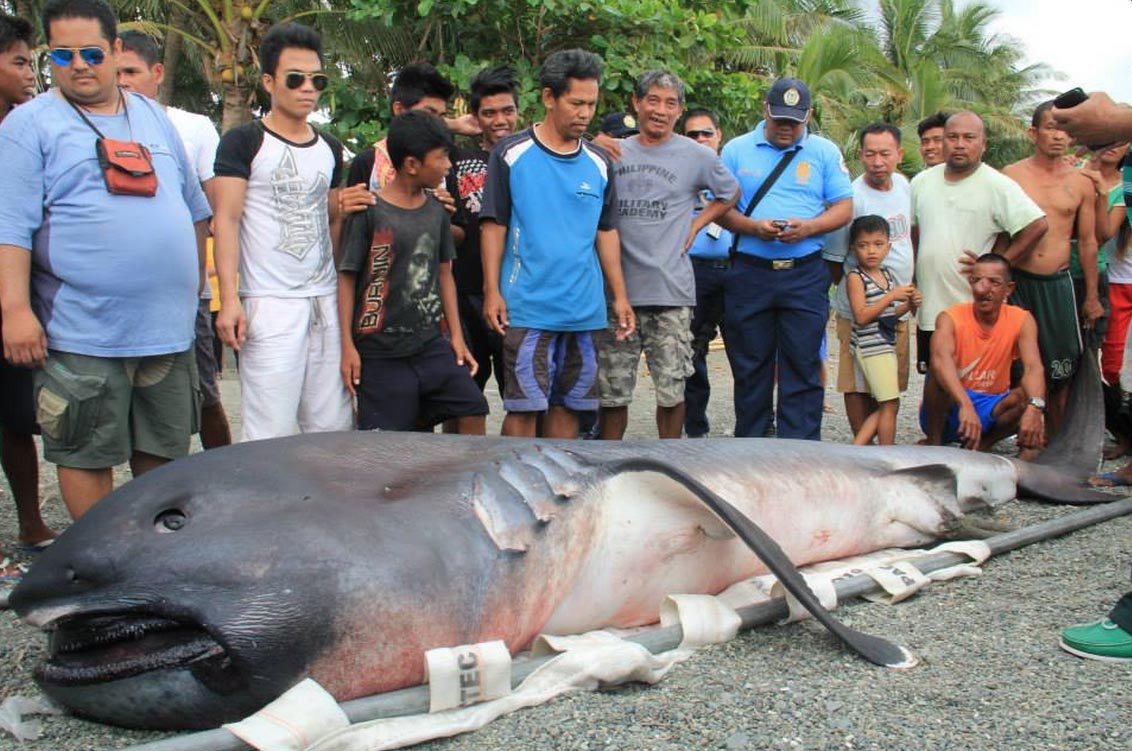 Screen Shot 2015-02-04 at 9.43.37 AM copy