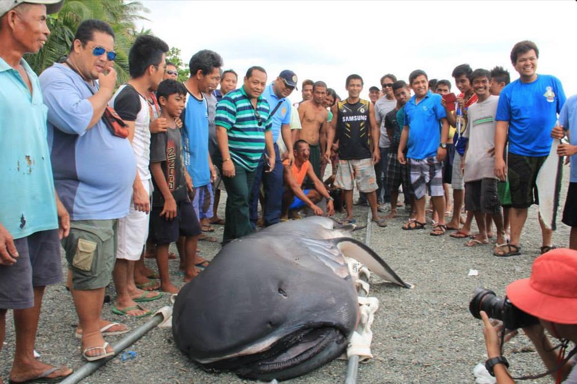 Screen Shot 2015-02-04 at 9.43.40 AM copy