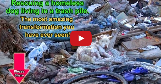 homeless dog living in trash