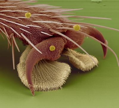 The foot of a housefly