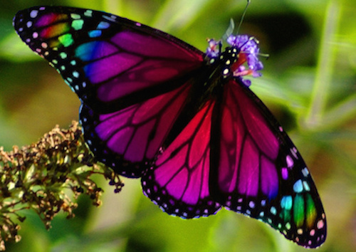 See Some Of The Most Beautiful Butterflies In the World ...  See Some Of The...