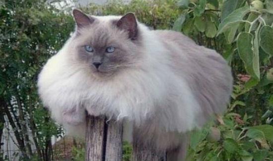 fat-cat-41