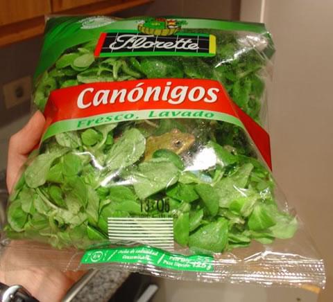 frog-in-salad-bag