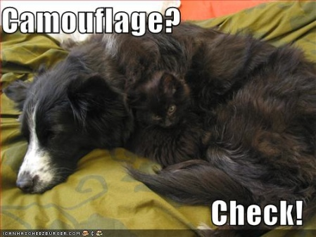 funny_pictures_cat_dog_camouflage_funny_cats_and_dogs_pics-s449x337-49233-580