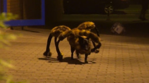 giant-spider-dog-3-650x364