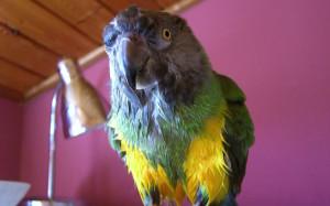 parrot_3088281a