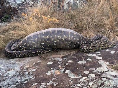 python2_962x722