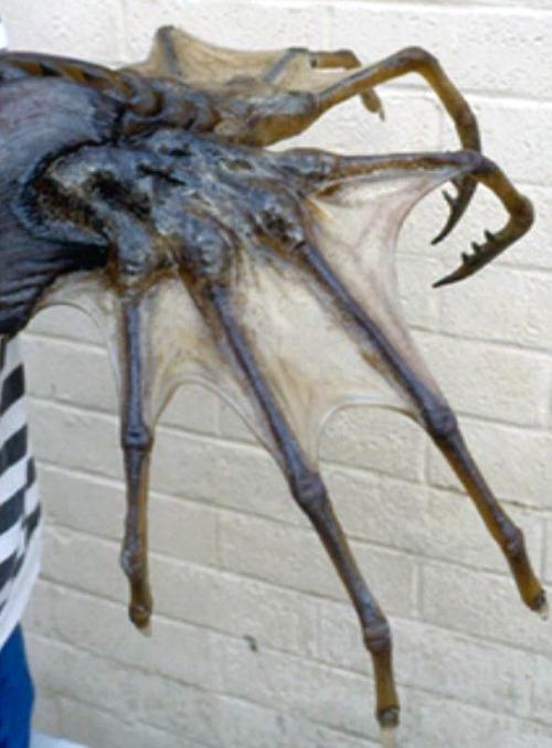 Giant sea spider bite
