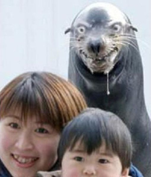 the_ultimate_animal_photobombs_collection_640_39