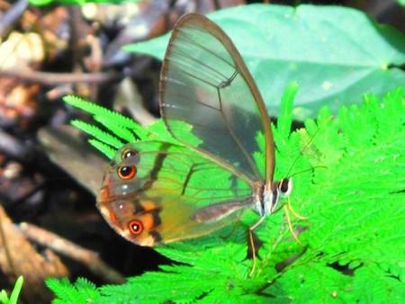 unique-transparent-butterfly